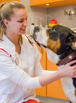 Dierenarts met grote hond bij Dierenziekenhuis Drachten