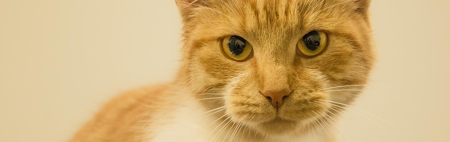 Dierenziekenhuis Drachten behaalt Gouden standaard Cat Friendly Clinic