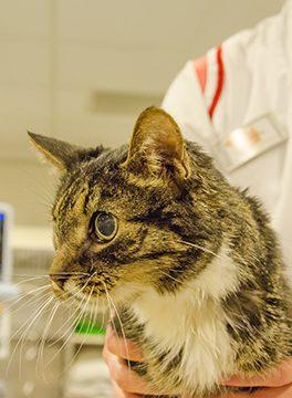 Katten nieuws Dierenziekenhuis Drachten