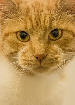 Katten nieuws Dierenziekenhuis Drachten oktober november